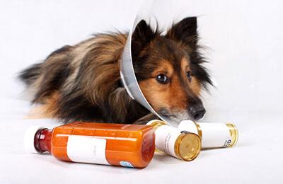 Zieke honden